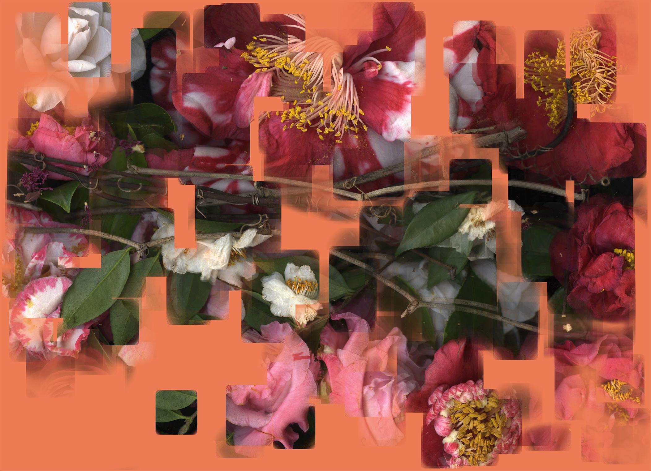 camellia scans